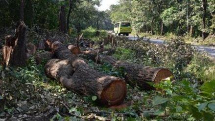 NH stretch through Dandeli wildlife sanctuary not being widened: NHAI tells HC